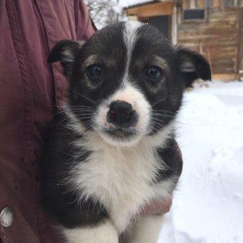 помет - Собаки в добрые руки