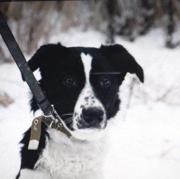 Жули - Собаки в добрые руки