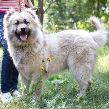 Аза - Собаки в добрые руки