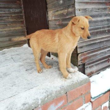 Туня - Собаки в добрые руки