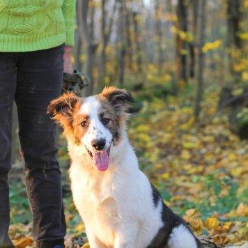 Августина - Собаки в добрые руки