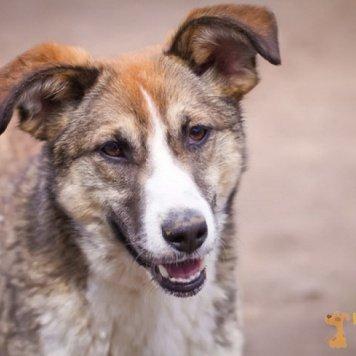 Кама - Собаки в добрые руки
