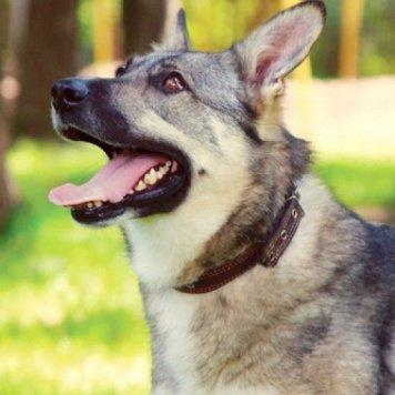 Ракша - Собаки в добрые руки