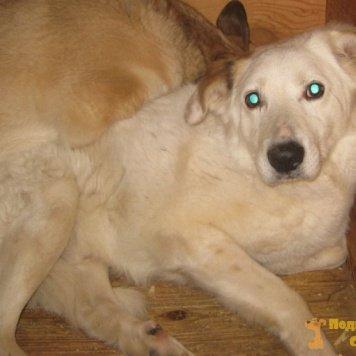 Богнер - Собаки в добрые руки