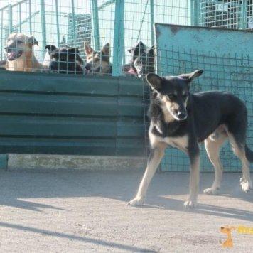 Арно - Собаки в добрые руки