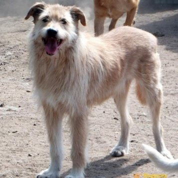 Тихон - Собаки в добрые руки