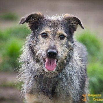 Штрудель - Собаки в добрые руки