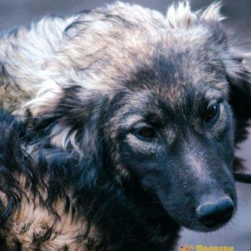 Пума - Собаки в добрые руки