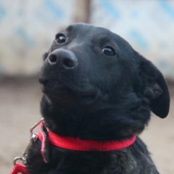 Сторми - Собаки в добрые руки