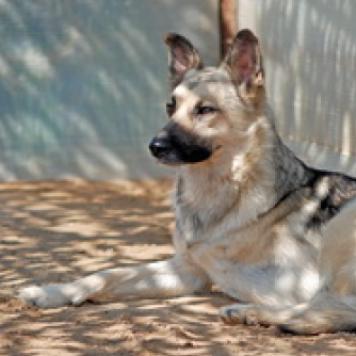 Рубин - Собаки в добрые руки