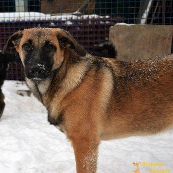 Мэлони - Собаки в добрые руки