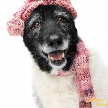 Саяна - Собаки в добрые руки