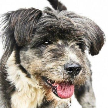 Боб - Собаки в добрые руки