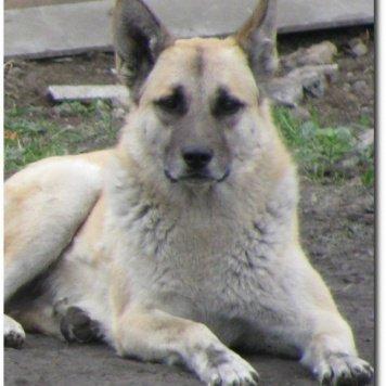 Смол / Герман - Собаки в добрые руки