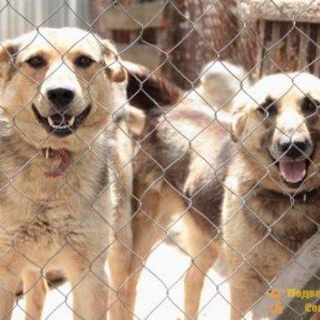 Люськи - Собаки в добрые руки