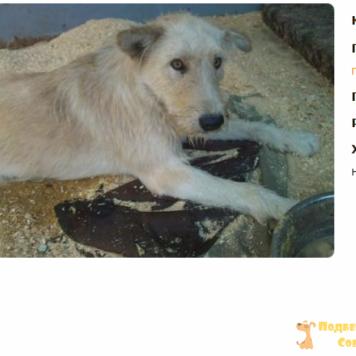 Трезор (Малой) - Собаки в добрые руки