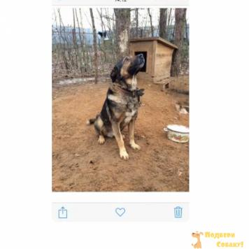 Пельмень - Собаки в добрые руки