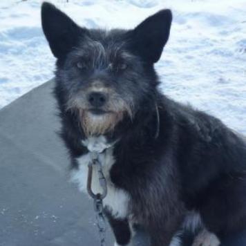 Клякса - Собаки в добрые руки