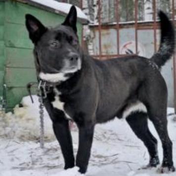 Хвостик - Собаки в добрые руки