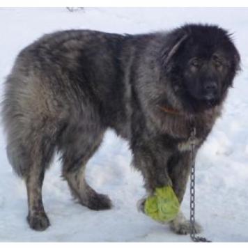 Сайва - Собаки в добрые руки