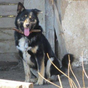 Боливар - Собаки в добрые руки