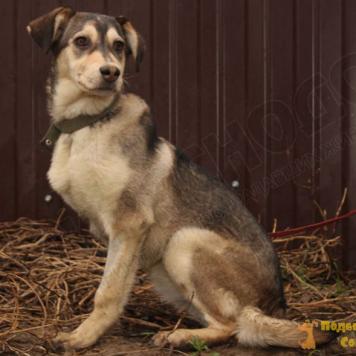 Стэфа - Собаки в добрые руки