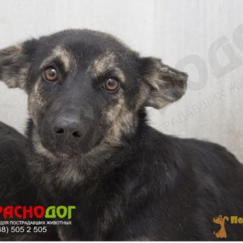 Анфиска - Собаки в добрые руки