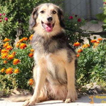 Айза - Собаки в добрые руки