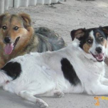 Белочка - Собаки в добрые руки
