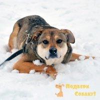 Феня - Собаки в добрые руки