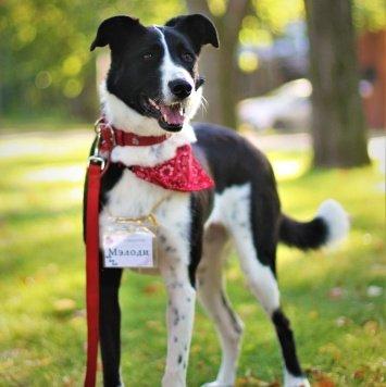 Мэлоди - Собаки в добрые руки