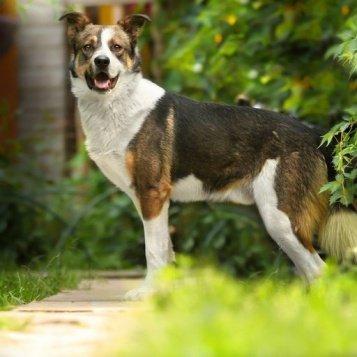 Берт - Собаки в добрые руки