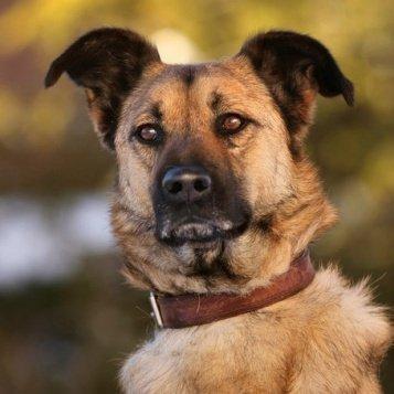 Вустер - Собаки в добрые руки