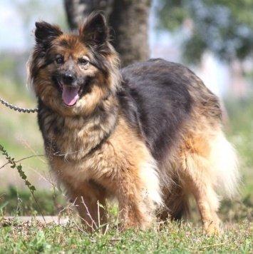 Фыра - Собаки в добрые руки