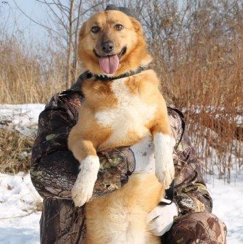 Джусь - Собаки в добрые руки