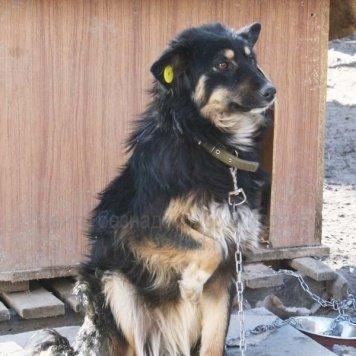 Кудряшка - Собаки в добрые руки