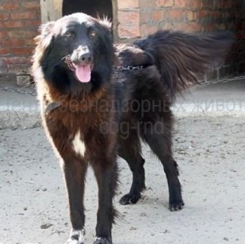 Перри - Собаки в добрые руки