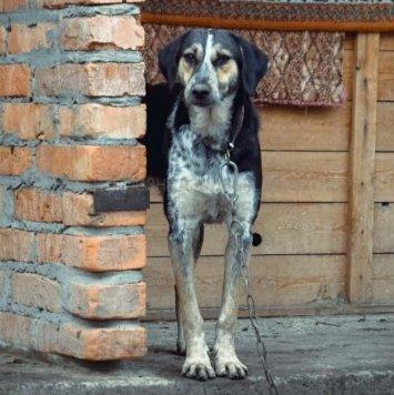 Рада - Собаки в добрые руки