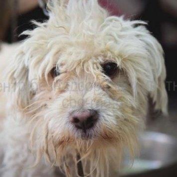 Мурзилка - Собаки в добрые руки