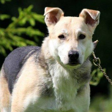 Лаврентий - Собаки в добрые руки