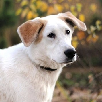 Маркиз - Собаки в добрые руки