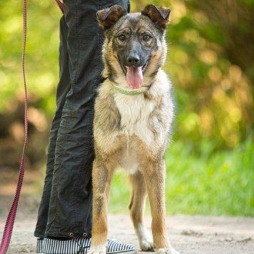 Кузя - Собаки в добрые руки