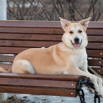 Элай - Собаки в добрые руки