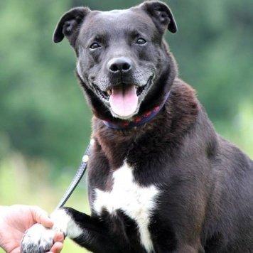 Пит - Собаки в добрые руки