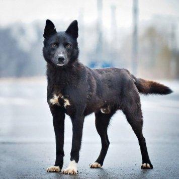Дрейк - Собаки в добрые руки