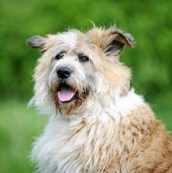 Чубака - Собаки в добрые руки