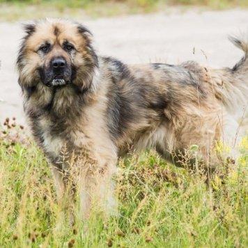 Семён Семёнович - Собаки в добрые руки