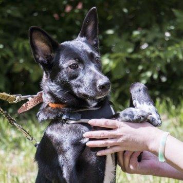 Черри - Собаки в добрые руки
