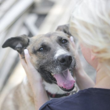 Застенчивая Ирма - Собаки в добрые руки