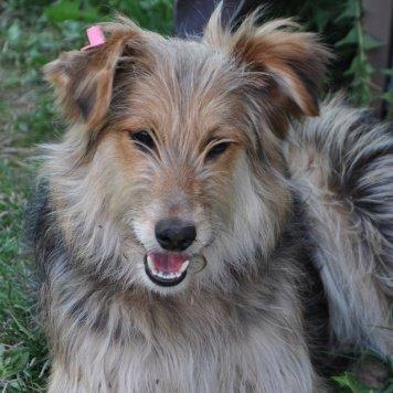 Мегги - Собаки в добрые руки